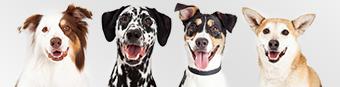 Az összes márka kutyáknak