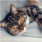 Postelje za mačke