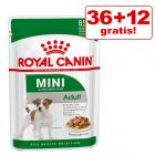 36 + 12 gratis! 48 x 85 g Royal Canin Mini in buste