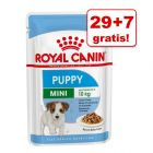 29 + 7 gratis! Royal Canin Size/Breed w saszetkach, 36 x 85 g