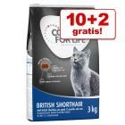 10 + 2 kg gratis! 12 kg Concept for Life tørrfôr for katter