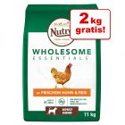 9 + 2 kg gratis! 11 kg Nutro Wholesome Essentials Adult Cane