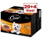 24 x 100g Cesar Deliciously Fresh Selection Wet Dog Food - 20 + 4 Free!*