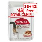 48 x 85g Royal Canin Wet Cat Food - 36 + 12 Free!*