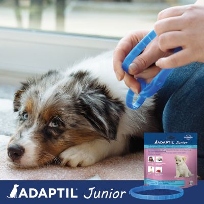 ADAPTIL® Junior Halsband