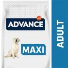Advance Maxi Adult frango e arroz