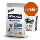 Advance Mini 7,5 kg pienso + snack Advance Dental snack Mini ¡gratis!