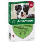 Advantage® 250 für Hunde