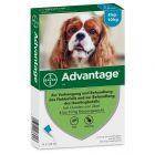 Advantage® 100 für Hunde