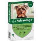 Advantage® 40 für Hunde