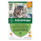 Advantage® 40 pour chat et lapin < 4 kg