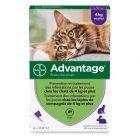Advantage® 80 pour chat et lapin > 4 kg