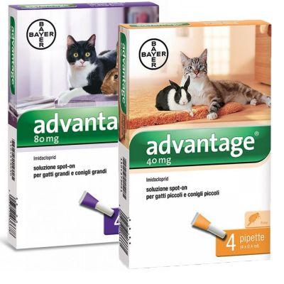 Advantage® soluzione spot-on per gatti e conigli prezzi bassi | zooplus