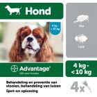 Advantage® 100 voor Honden 4 - 10 kg