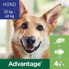 Advantage® 400 voor Honden vanaf 25 kg