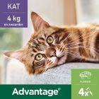 Advantage® 80 voor Katten vanaf 4 kg
