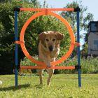 Agilidade, Divertimento e Desporto - Jumping Hoop