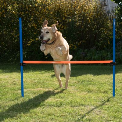 Agility Fun & Sport Hinder