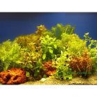 Aquariaplanten Bundel Planten-Assortiment