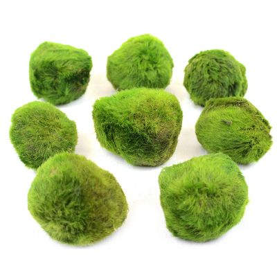 Aquarienpflanzen Zooplants Moosball-Set
