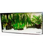 Aquariumplanten Zooplants Discus-Assortiment