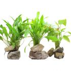 Aquariumplanten Zooplants XL Achtergrondplanten-Set
