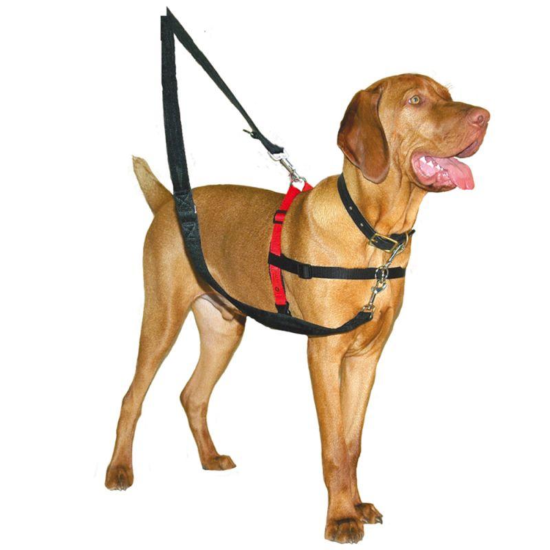 Correa y Collar de 1,2 m Vi.yo Correa de Nailon Ajustable para Entrenamiento de Perros