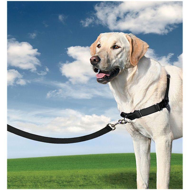 Halti Control Frontal arnés del perro No Tire Arnés para perros pequeños deje de perro parece