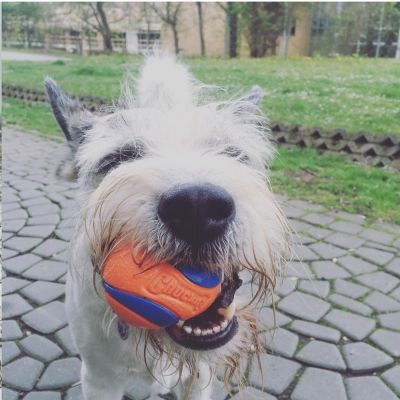 Balles Ultra Ball Chuckit! taille S pour chien