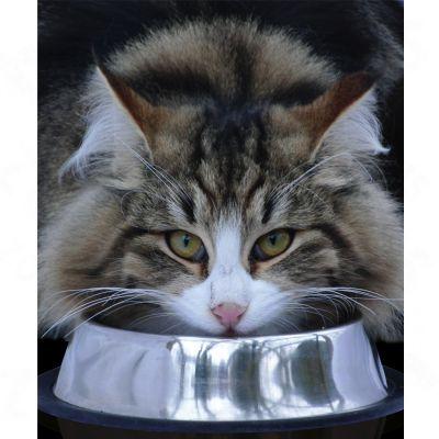 velká šťavnatá mokrá kočička