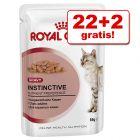 22 + 2 besplatno! 24 x 85 g Royal Canin u umaku / želeu