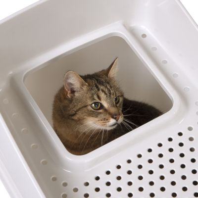 Big Box Cat Litter Tray