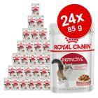 Blandat ekonomipack: 24 x 85 g Royal Canin gelé & sås
