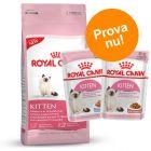 Blandat provpack: Royal Canin Kitten + 24 x 85 g våtfoder