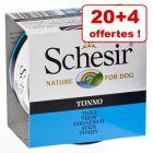Boîtes  Schesir  pour chien 20 x 150 g + 4 x 150 g offertes !