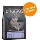Briantos hrană uscată la preț de testare!