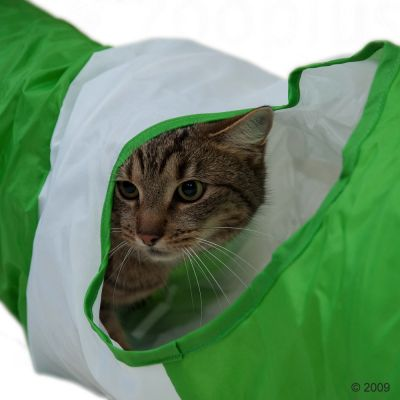 Cat Tunnel in Green and White