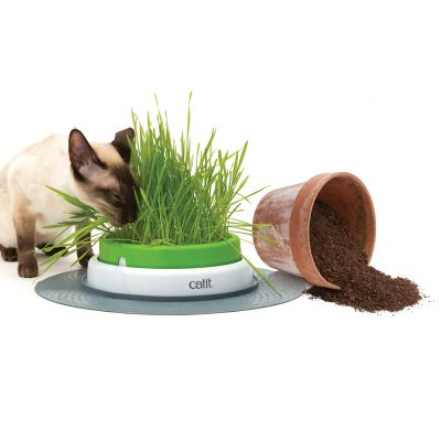 Catit Senses 2 0 Grass Planter Great Deals At Zooplus