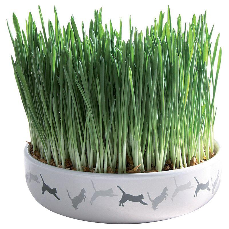 Ceramic Cat Grass Bowl