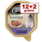 Cesar comida húmida para cães 14 x 150 g em terrinas: 12 + 2 grátis!