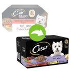 Cesar Juicy Hotpot Sélection mixte pour chien