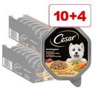Cesar koiranruoka 14 x 150 g: 10 + 4 kaupan päälle!