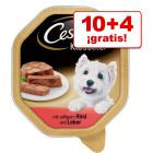 Cesar 14 x 150 g comida húmeda en tarrinas: 10 + 4 ¡gratis!