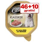 Cesar 56 x 150 g comida húmeda en tarrinas: 46 + 10 ¡gratis!