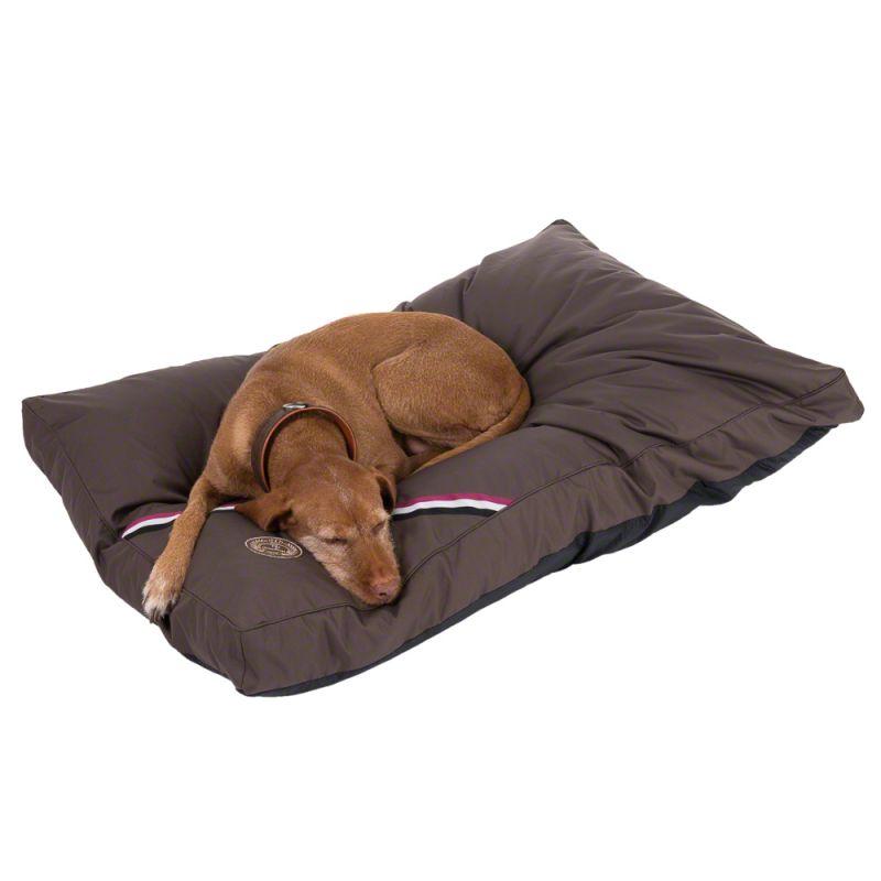 Champion Dog Cushion