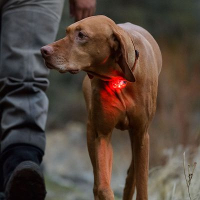 Colgante luminoso Ruffwear The Beacon™ para perros