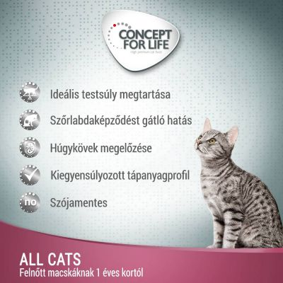 Concept for Life All Cats - szószban