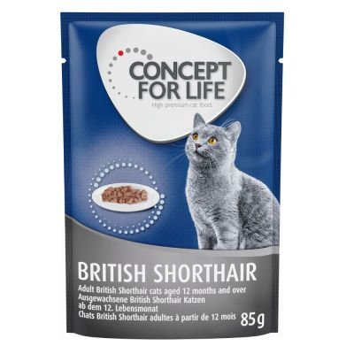 Concept for Life British Shorthair Adult (a base di pregiato ragù)