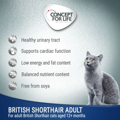 Concept for Life British Shorthair Adult - in Ragout