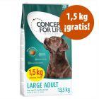 Concept for Life en oferta 12 kg + 1,5 kg ¡gratis!